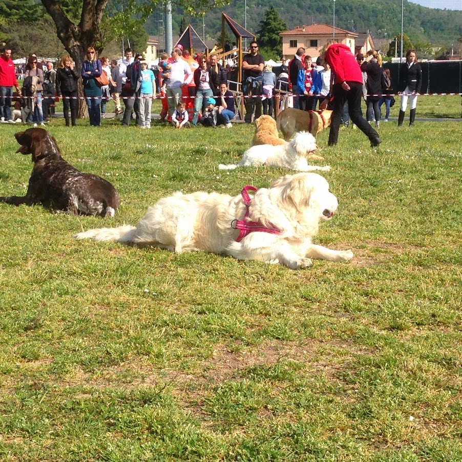 I cani della protezione civile di Botticino